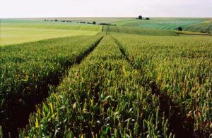 agriculture naturelle