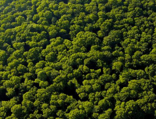 Amazonie, massacre à la tronçonneuse