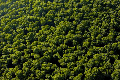 forêt déforestation